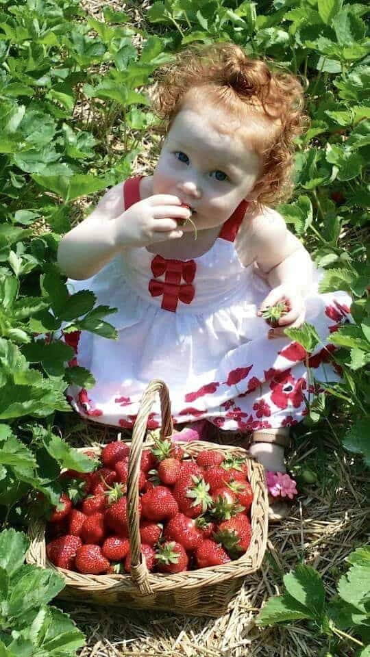 little girl eating strawberries at ridgeview farm in geauga county