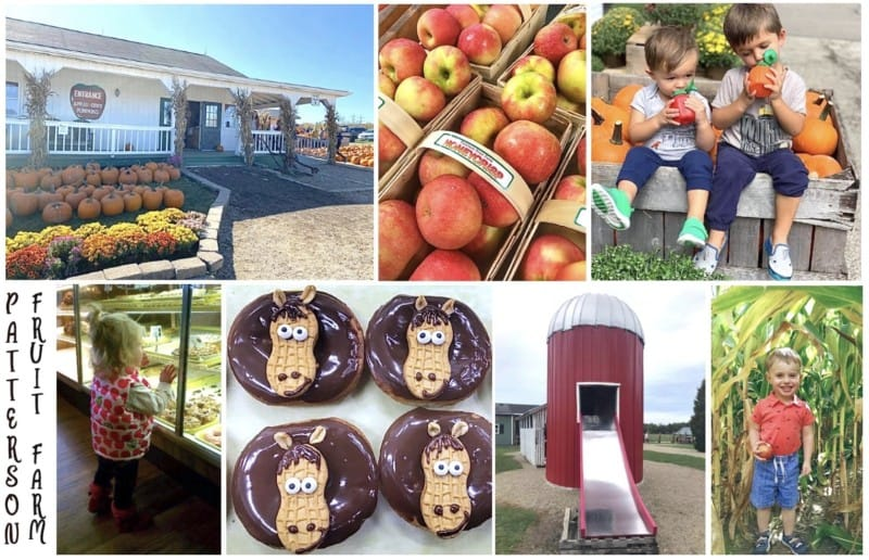 activities and food at patterson fruit farm market in geauga county